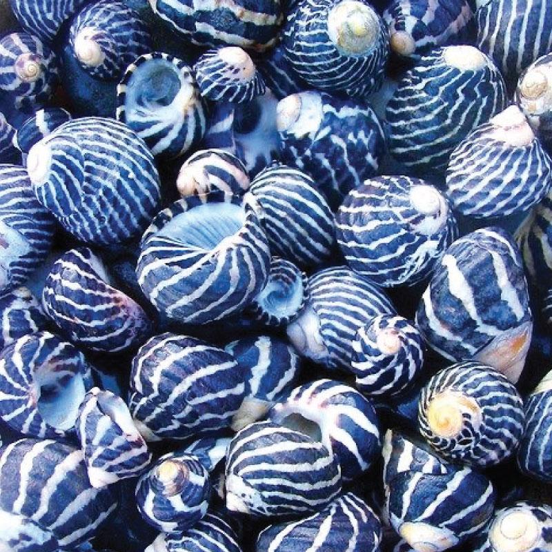 Seaside classic blue pantone 2020