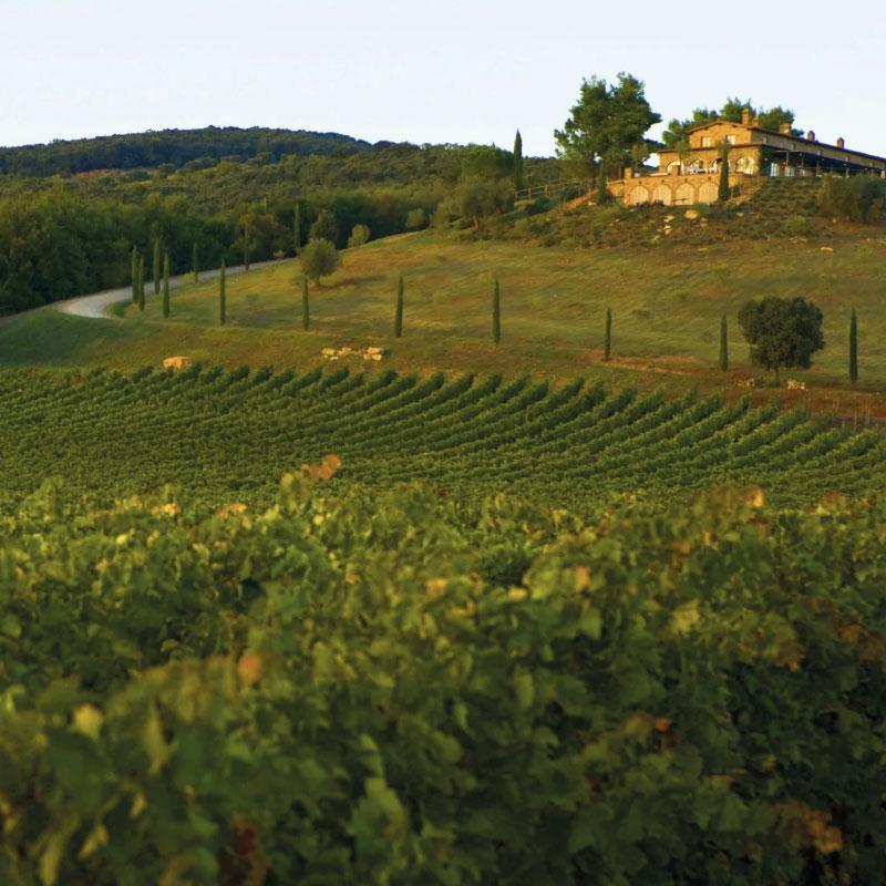 wedding Italian vineyards
