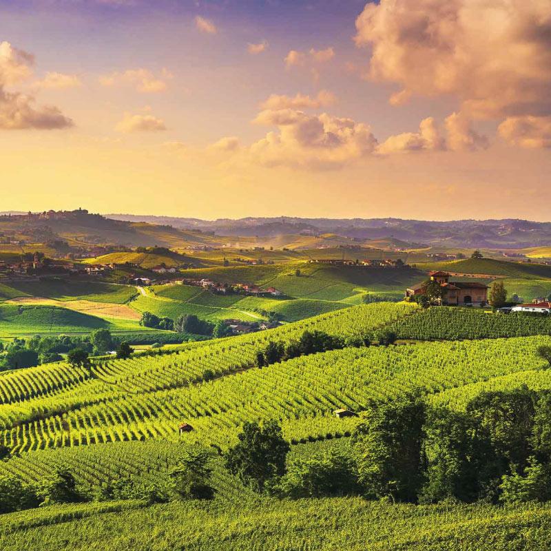 Wedding planner vineyards Italy